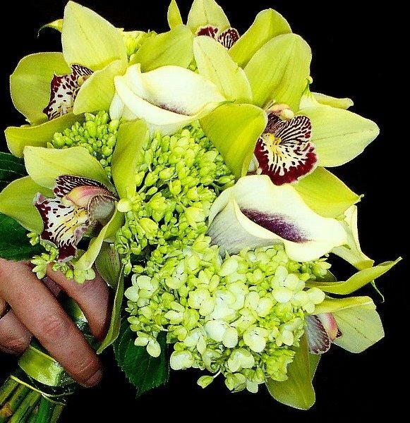 Beautiful in all green and a touch of burgundy.  Hydrangea, Cymbidium Orchids, and Mini Calla Lilies make for such a dramatic bouquet.